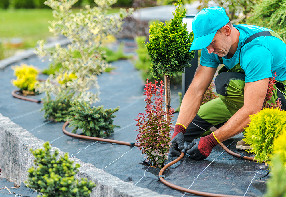 Bay Area Landscaping