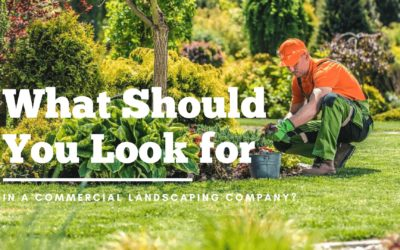 What Should You Look for In a Commercial Landscaping Company?